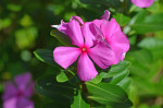 Allerton Gardens, Poipu, Kauai